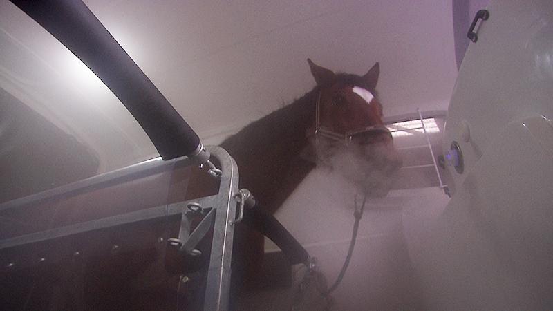 Salzgrotte für Pferde