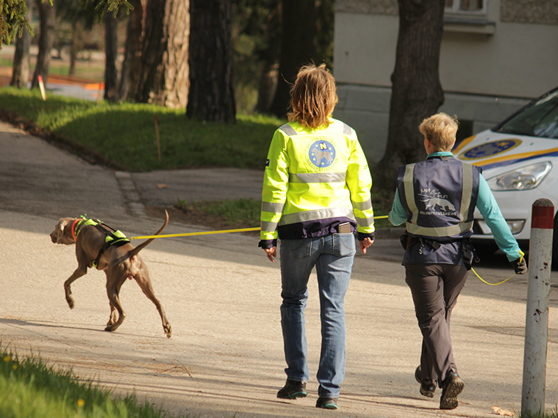 Rettuntgshunde Niederösterreich Mantrailing