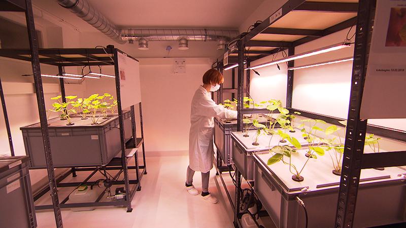 Indoor-Farming-Versuchsanlage in Oberwart