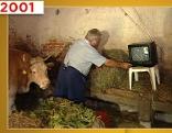 Kuh sieht TV