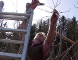 Ausbildner schneidet Obstbaum mit Schere