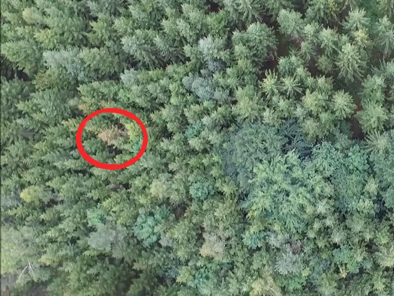 Berühmt Borkenkäfer: Drohnen finden kranke Bäume - kaernten.ORF.at #TZ_33