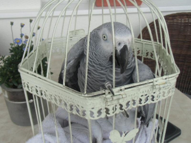 Papagei Tiersuche