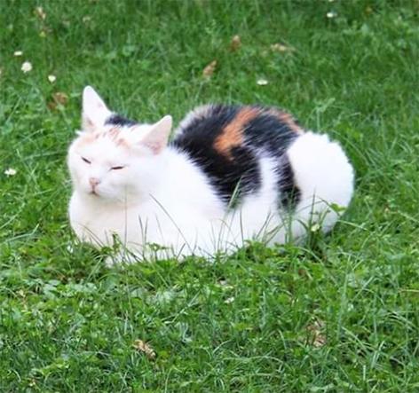 Katze Mauli weg in der Stadt Salzburg