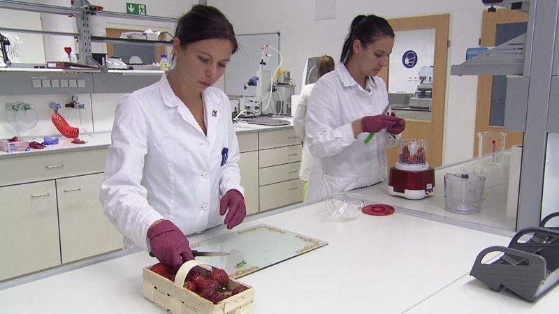 Erbeeren im Labor