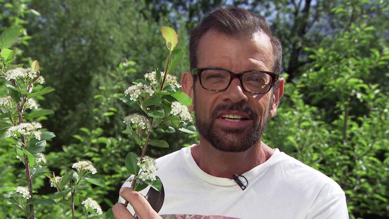 Karl Ploberger mit einem Apfelbeerenstrauch