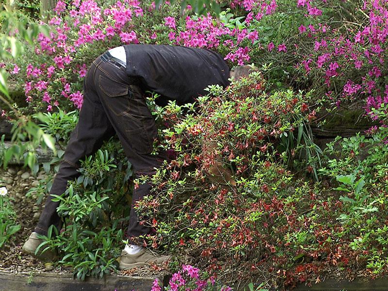Blumen in den Grenzübergreifenden Gärten