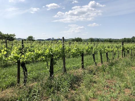 SSC Wein Collio