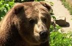 Tierpark Haag Bär