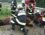 Pferd Güllegrube Feuerwehr