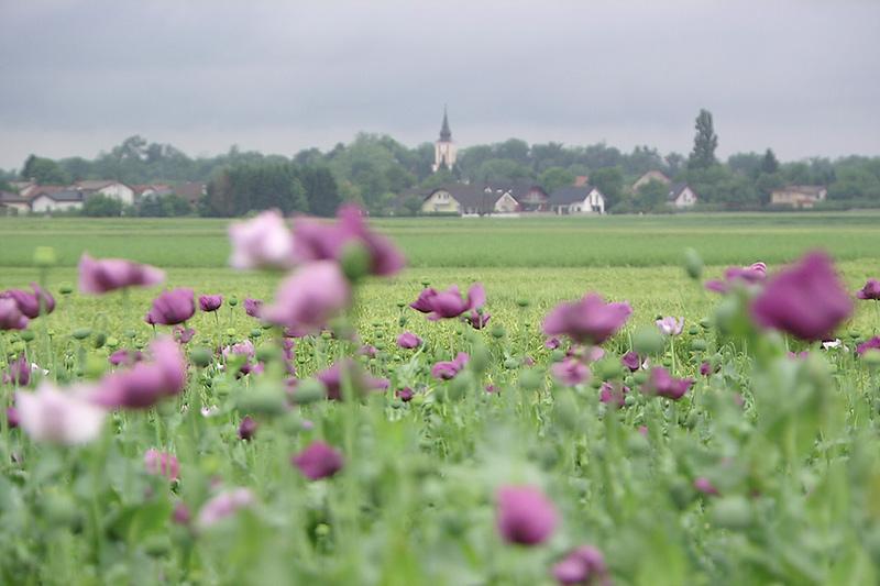 Landschaft Slowenien Prekmurje