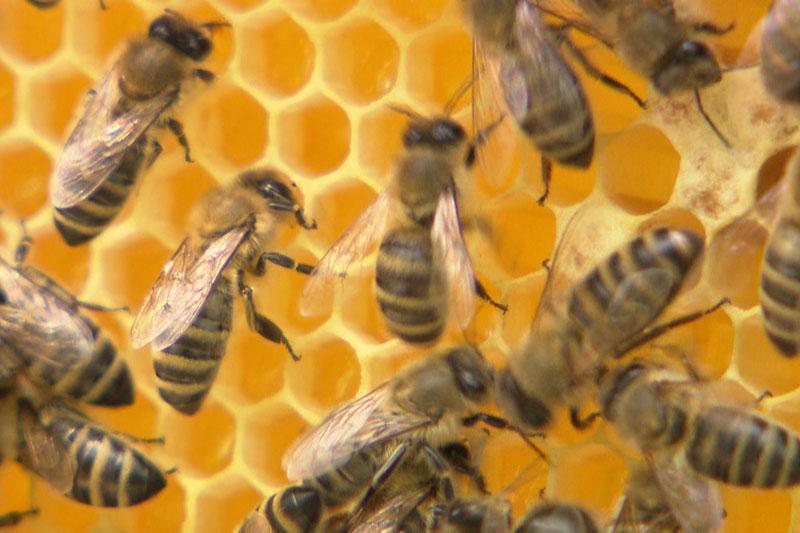 Imkerei Bienen Jungimker Honig
