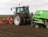 Kartoffeln werden mit Traktor ins Feld gelegt