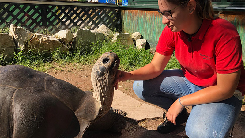 Bibi Poldi Riesenschildkröten Happ