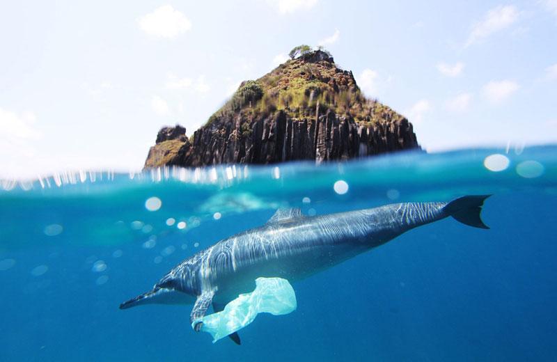 Delfin mit Plastisack an Flosse