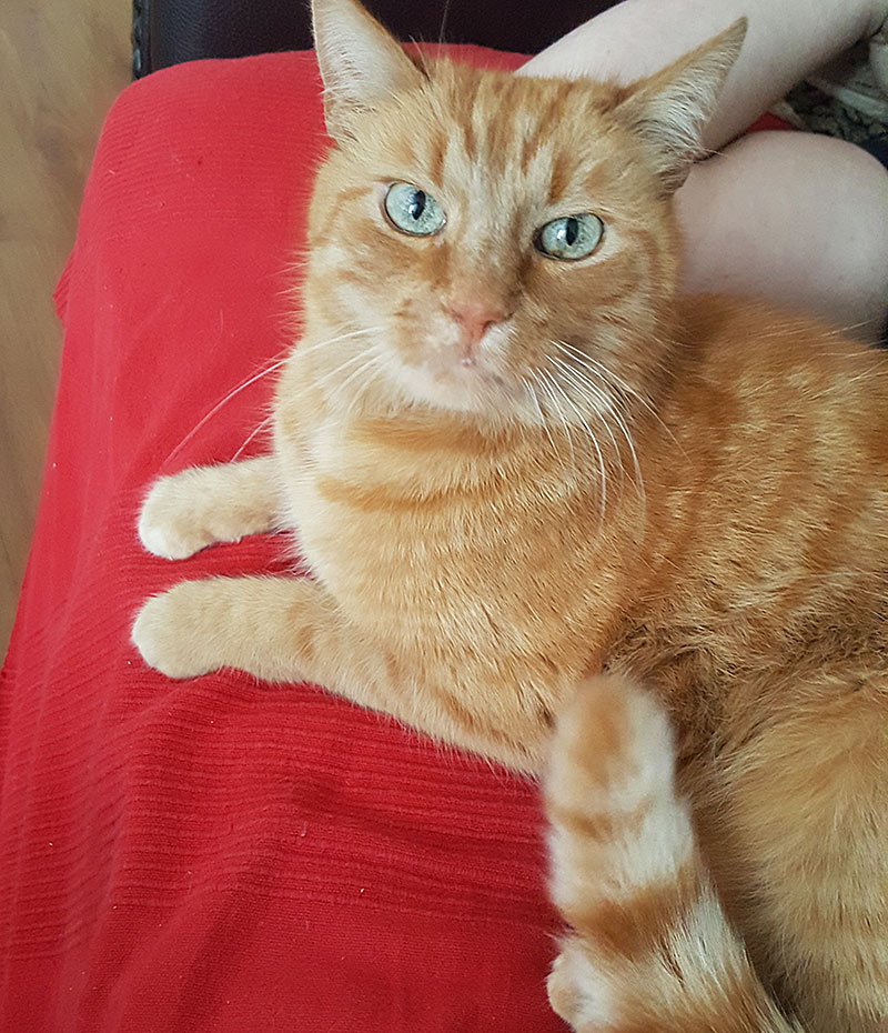 Katze Jacky in Maxglan weg