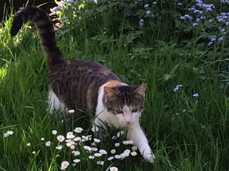 """Katze """"Lucy"""" vermisst"""