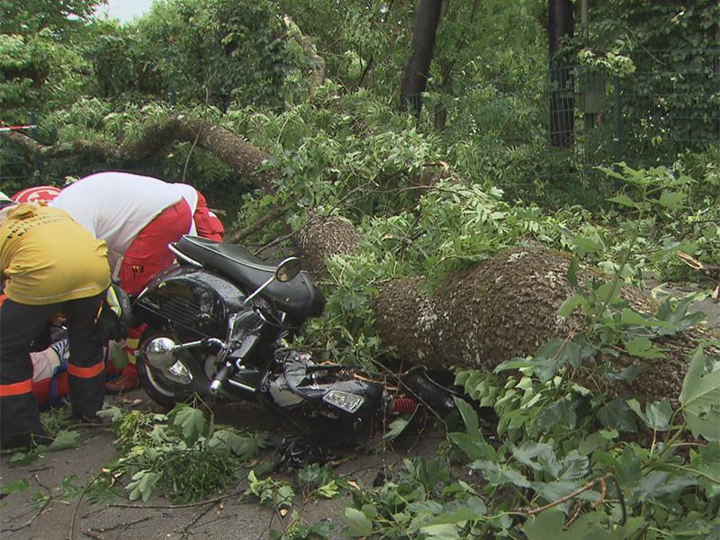 Motorradfahrer von Baum getroffen und schwer verletzt