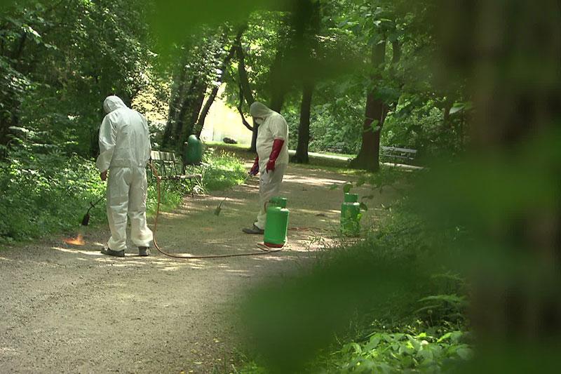 Maßnahmen gegen Eichenprozessionsspinner im Schlosspark Schönbrunn