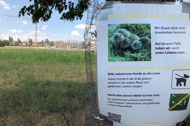 Ziesel Gründe Stammersdorf