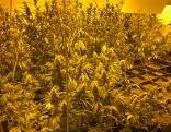 Indoor Cannabis Plantage im Keller eines Wohnhauses