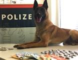 Schwerpunktkontrolle Schutzzone Wiener Neustadt Drogen Suchtgift