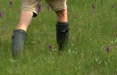 Mann geht mit Gummistiefeln durch Moorwiesen mit Blumen