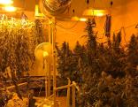 Indoor-Cannabis-Plantage Grödig