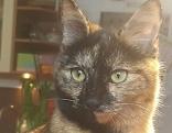 Katze in Großgmain vermisst