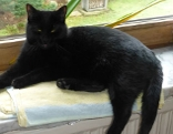 Schwarze Katze Panther