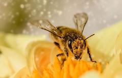 Bienen auf Blumen