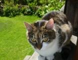Katze Bessie