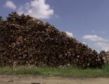 Borkenkäfer Holz