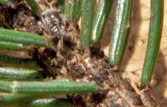 Honig Bienen Waldhonig Waldläuse Honigtau