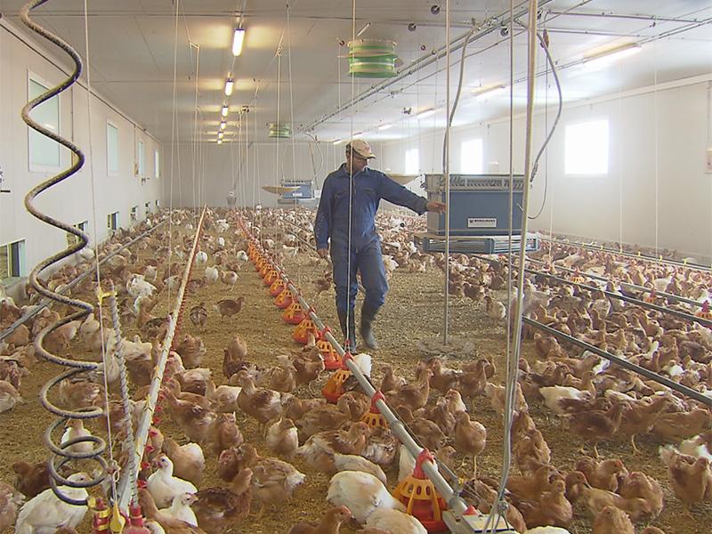 Protest gegen Hühnermastbetrieb