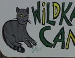 Wildkatzen Camp Thayatal