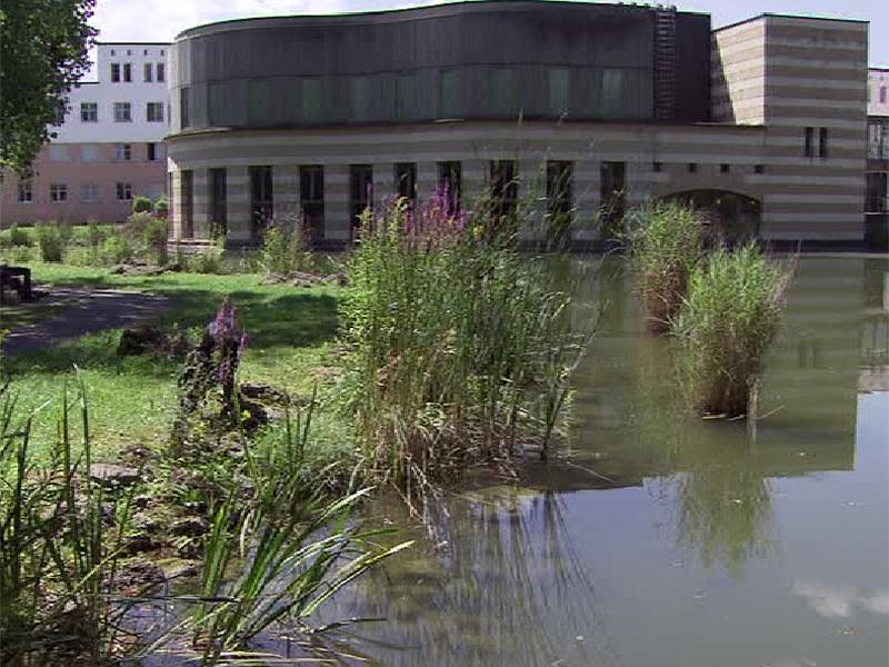 Blaualgen Seen Teich Alge