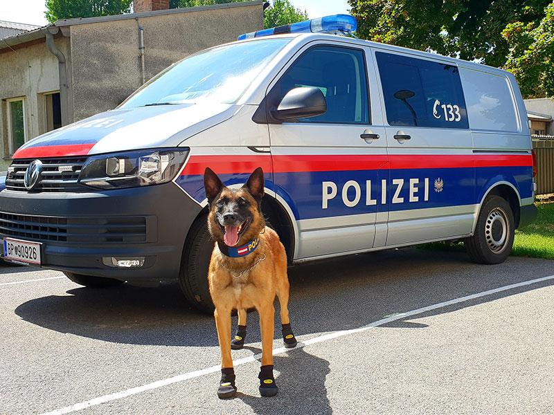 Pfotenschutz für Polizeihunde bei Hitze