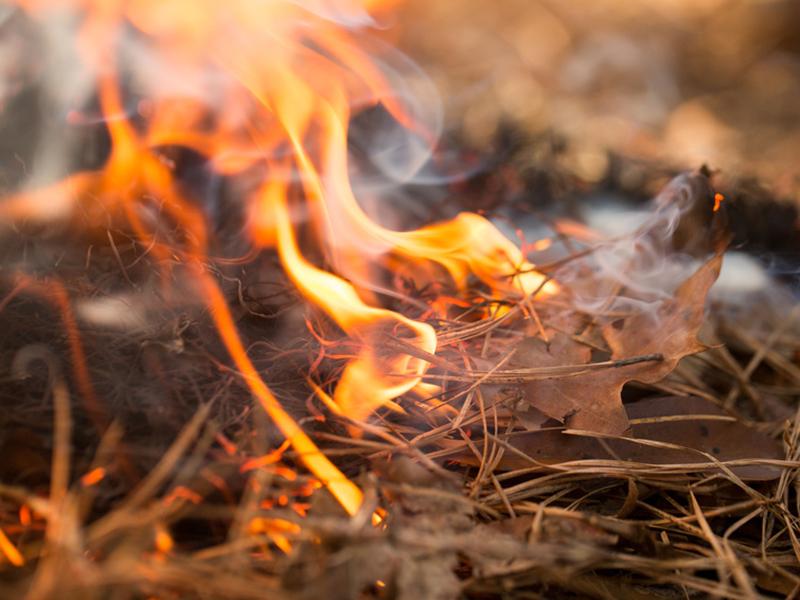 Feuer Brand Waldbrand