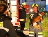 Feuerwehr rettet Hund