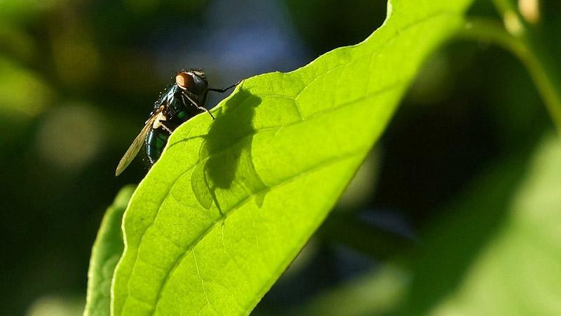 Fliege Erlebnis Natur Blatt Insekt