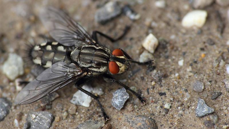 Fliege Erlebnis Natur Insekt