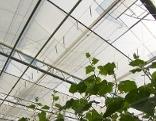 Hitze macht Probleme in Glashäusern