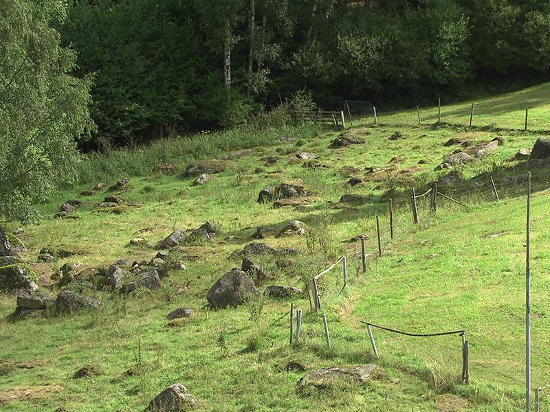 Wolf Landeszuchtverband Schaf fordert Jagd