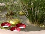 Wassergarten für die Terrasse Gut gepflanzt