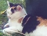 Katze Lilli im Nonntal weg