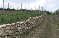 Luka Zeichmann suha zid u vinogradu Joiseph