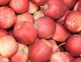 Trgadba jabuka
