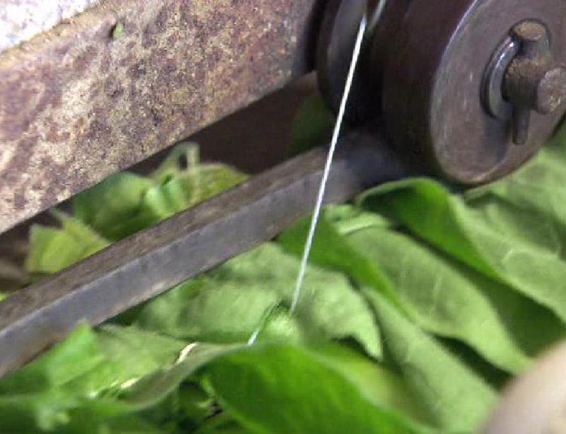 Für das Zusammenähen der Blätter wird eine alte Nähmaschine aus Slowenien verwendet.
