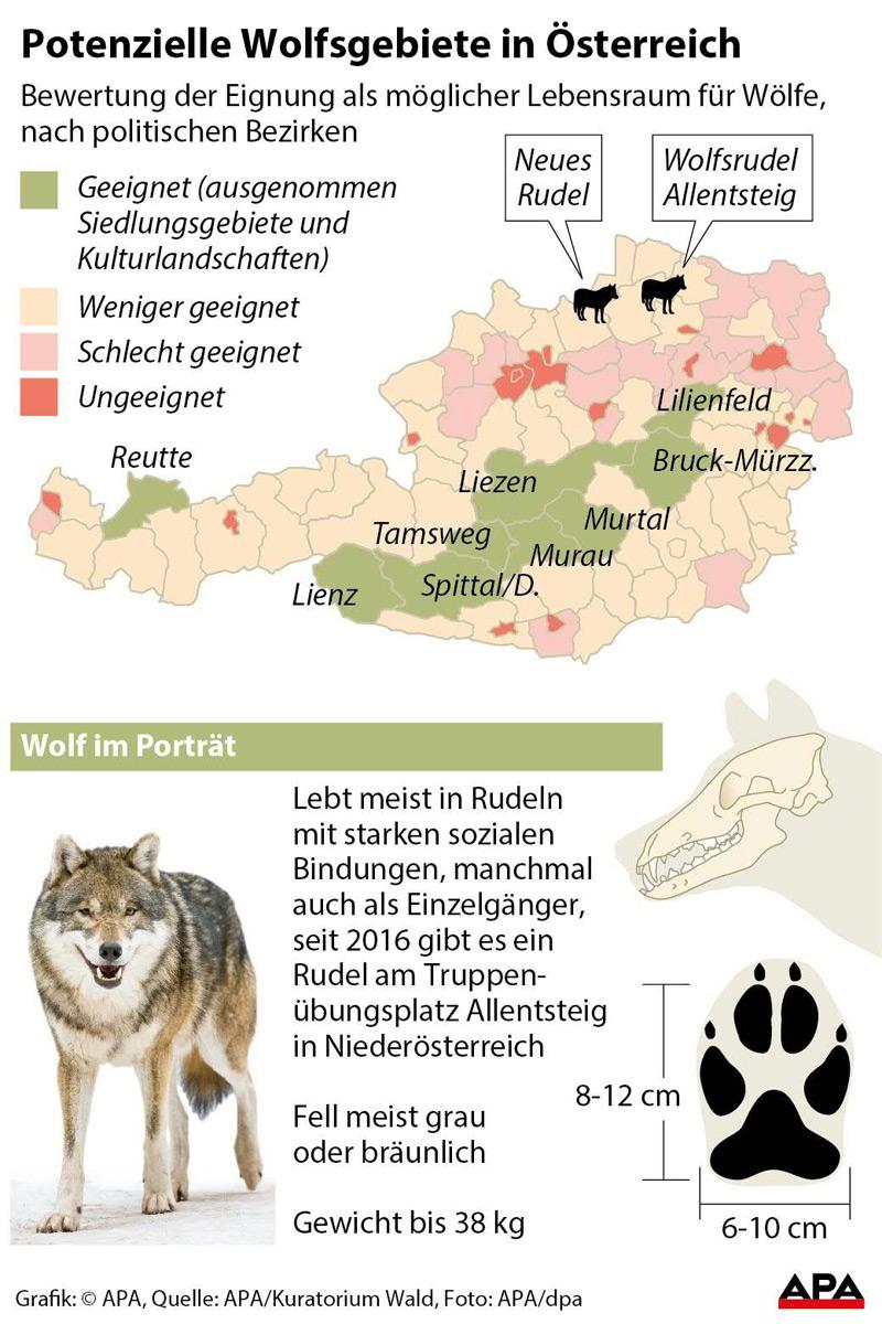 Bewertung der Eignung als möglicher Lebensraum für Wölfe, nach politischen Bezirken - Karte; Factbox zum Wolf
